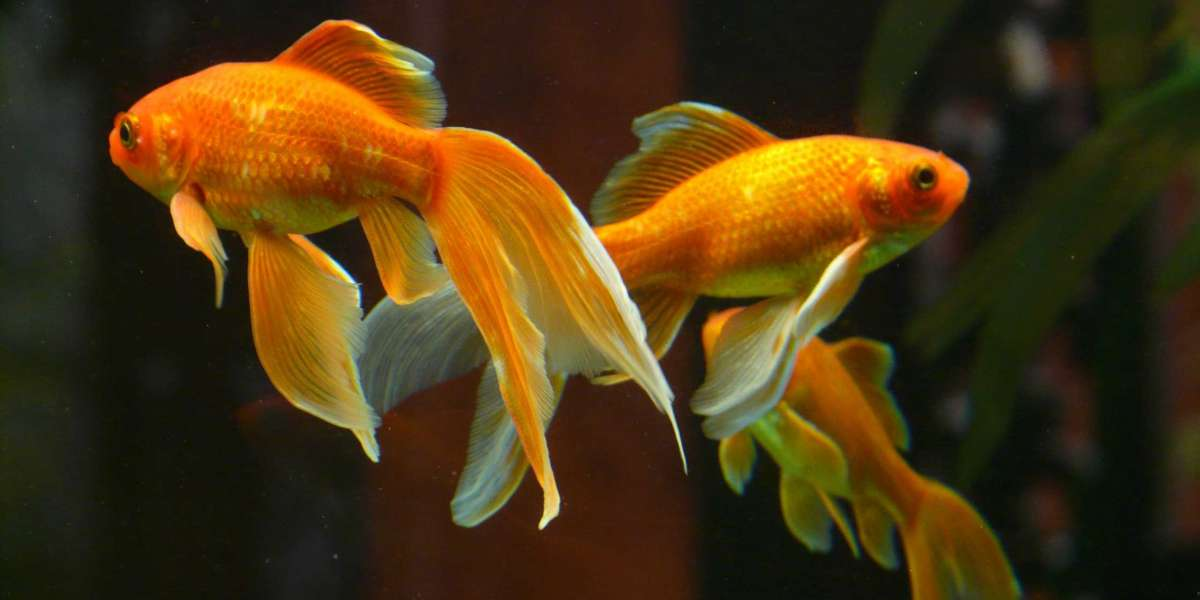 Aquarium at home? read everything you must know here!