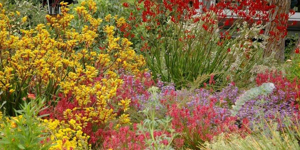 Magical Tips to Grow Australian Native Plants in Your Garden