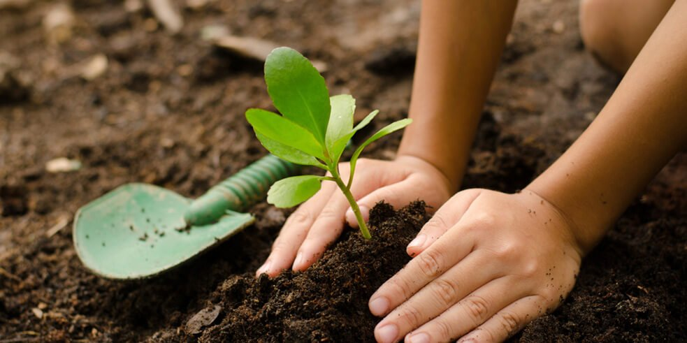 Planting Garden Brighton, Hampton | Plan Sourcing/Selection