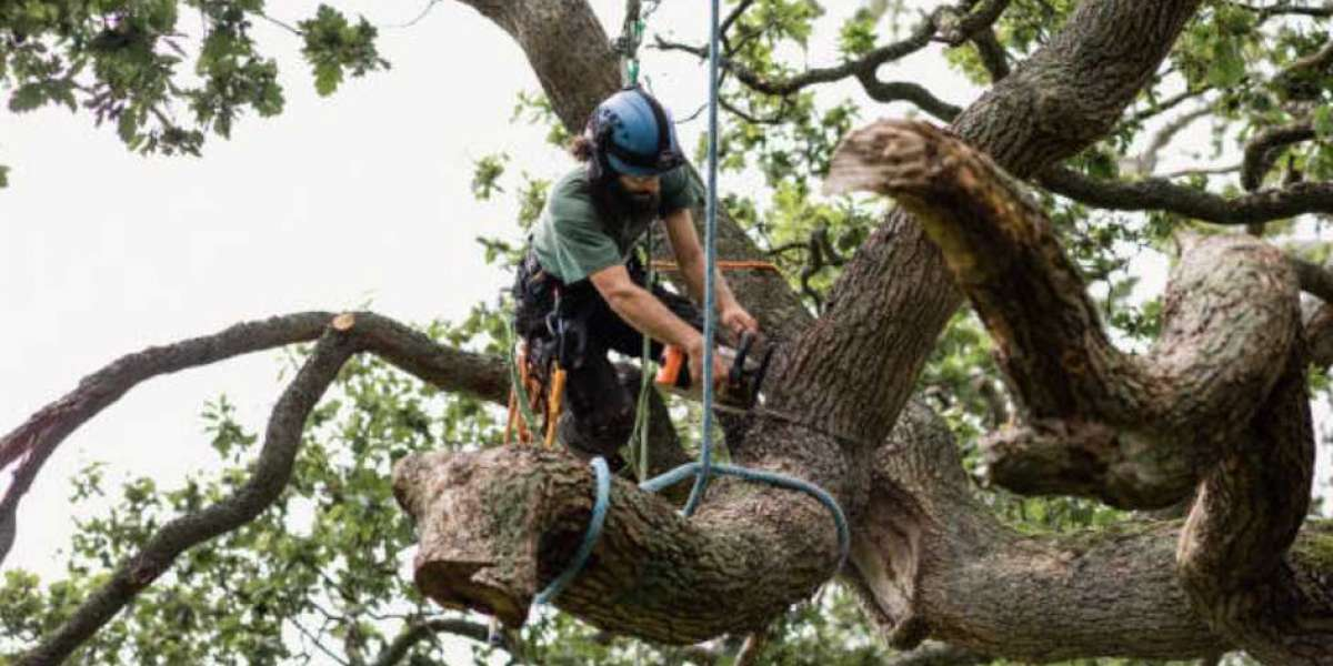 Tree Service Summerville SC