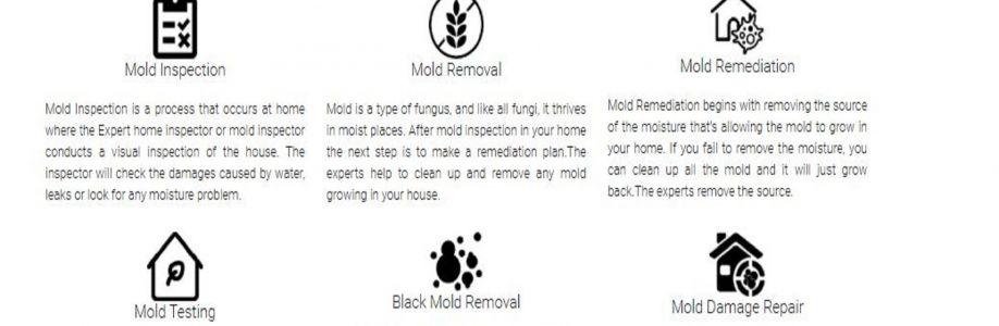 ALL US Mold Removal & Remediation - Amarillo TX Cover Image